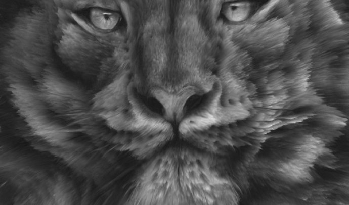 Серая Рысь из племени духа Черного камня
